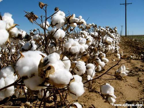 贸易摩擦大浪急 美棉进口成本增长 纺企如何应对?